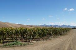 加利福尼亚州的葡萄园 免版税库存图片