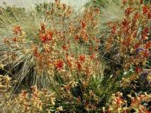 加利福尼亚干燥植物群 图库摄影