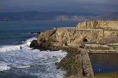 加利福尼亚弗朗西斯科灰狼指向岩石圣密封 库存照片