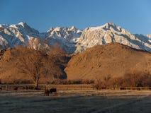 加利福尼亚惠特尼山脉 库存照片