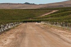 加利福尼亚收获路时间葡萄园 免版税库存图片