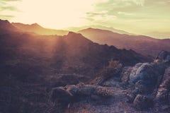 加利福尼亚日落的地面蛇沙漠 免版税库存照片