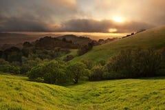 加利福尼亚有雾的草甸日落 免版税库存照片