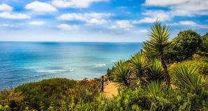 加利福尼亚棕榈树 库存图片