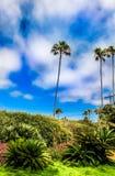 加利福尼亚棕榈树 库存照片