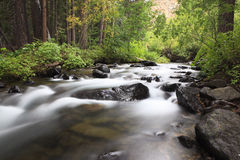加利福尼亚森林山流 库存图片