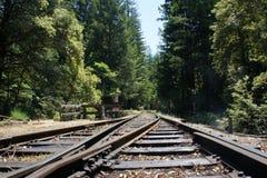 加利福尼亚森林红木 库存照片