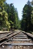 加利福尼亚森林红木 图库摄影