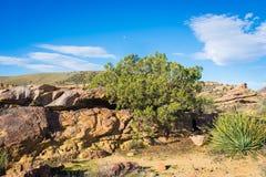 加利福尼亚沙漠地质  免版税库存照片