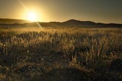 加利福尼亚沙漠日出 免版税库存照片