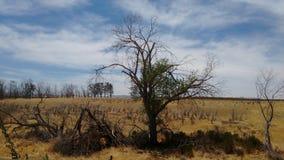 加利福尼亚沙漠 免版税库存照片