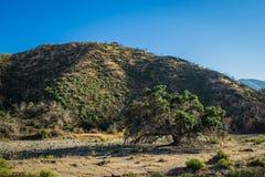 加利福尼亚河床峡谷 免版税库存照片