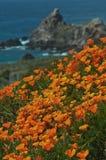 加利福尼亚海岸在春天 免版税图库摄影