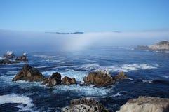 加利福尼亚海岸灰狼点 库存图片