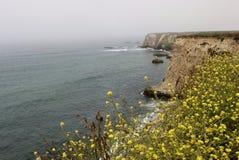 加利福尼亚海岸,坚固性峭壁在达文波特 免版税库存照片