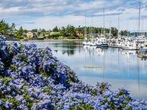 加利福尼亚淡紫色开花在有被停泊的小船的小游艇船坞前面 免版税库存图片