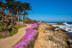 加利福尼亚紫色 库存照片