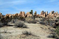 加利福尼亚约书亚国家公园s结构树 库存照片