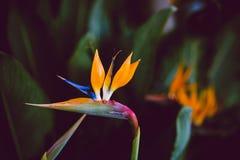 加利福尼亚花,冬天从事园艺 免版税库存照片