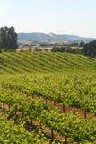 加利福尼亚葡萄园酒 免版税库存图片