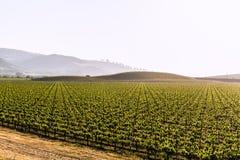 加利福尼亚葡萄园领域在美国 免版税图库摄影