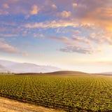 加利福尼亚葡萄园领域日落在美国 免版税库存照片