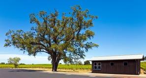加利福尼亚葡萄园 免版税库存图片