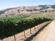 加利福尼亚葡萄园 免版税库存照片