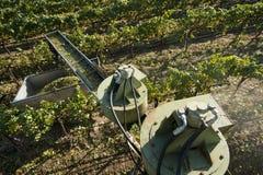 加利福尼亚葡萄收获酒 库存图片