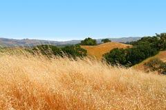加利福尼亚金黄小山 免版税库存图片