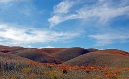 加利福尼亚金黄鸦片在南加利福尼亚高沙漠  免版税库存照片