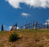 加利福尼亚金黄鸦片在Paso罗夫莱斯酒乡风景 免版税库存照片