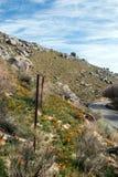 加利福尼亚金黄鸦片临近湖伊莎贝拉 库存图片