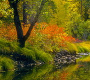 加利福尼亚颜色秋天优胜美地 库存图片