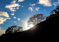 加利福尼亚风景 太阳火光通过树 库存照片