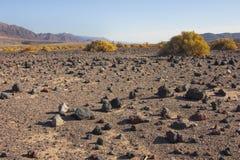 加利福尼亚,死亡谷国家公园,沙漠植被 库存图片