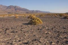 加利福尼亚,死亡谷国家公园,沙漠植被 库存照片