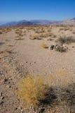 加利福尼亚,死亡谷国家公园,沙漠植被 免版税库存图片