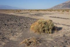 加利福尼亚,死亡谷国家公园,沙漠植被 图库摄影