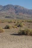 加利福尼亚,死亡谷国家公园,沙漠植被 免版税库存照片