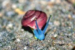加利蜗牛 免版税库存图片