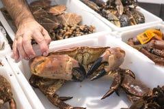 加利西亚螃蟹 免版税库存照片
