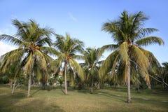 加勒比岛 免版税库存图片