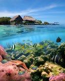 加勒比梦想 免版税库存图片
