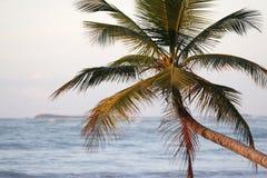 加勒比棕榈树 免版税库存照片