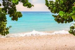 加勒比海在有植物的多米尼加共和国lo 免版税库存照片