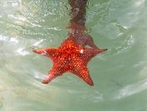 加勒比海星在水中 库存图片