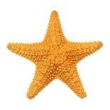 加勒比海星 库存图片