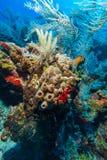 加勒比海桑迪底部有珊瑚和鱼的 免版税库存照片