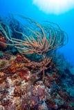 加勒比海桑迪底部有珊瑚和鱼的 库存照片